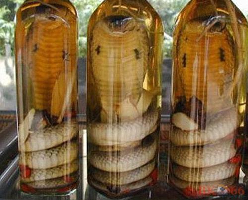Bình rượu rắn hổ mang 1 con