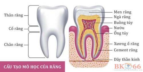Các vấn đề răng miệng